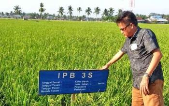 Kepala Dinas Pertanian Barito Utara, Setia Budi saat mengunjungi Balai Benih Induk Padi (BBIP) di Sei Pinyuh Kabupaten Mempawah Kalimantan Barat (Kalbar).