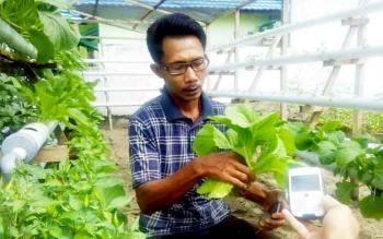Rido, warga yang membudidayakan tanaman secara hidroponik.