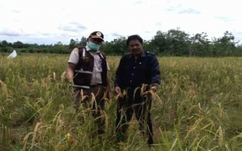 Penyuluh pertanian di Palangka Raya