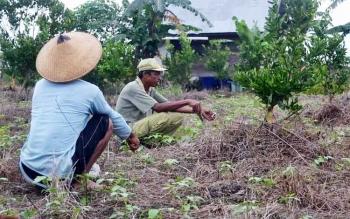 Petani Transmigrasi Desa Pulau Nibung Kecamatan Jelai Kabupaten Sukamara saat duduk dilahan pekarangan.