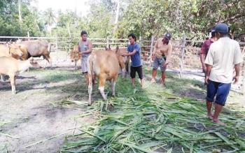 Dinas Ketahanan Pangan dan Pertanian Sukamara saat melakukan survey di Kecamatan Pantai Lunci Kabupaten Sukamara.