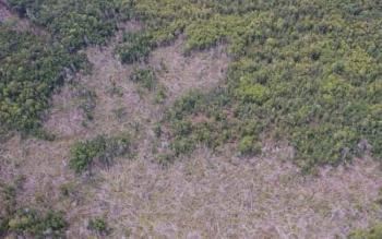 Pohon-pohon yang sudah ditebang di suatu kawasan di Kabupaten Barito Selatan saat dipantau dari atas udara oleh Gubernur Kalteng, Penjabat Bupati Barsel, dan Kapolres Barsel belum lama ini.