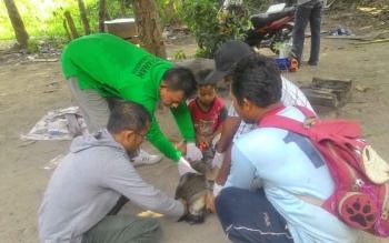Dinas Ketahanan Pangan dan Pertanian Sukamara saat memberikan vaksin rabies kepada anjing milik warga Dusun Terantang Desa Natai Sedawak, Kecamatan Sukamara.