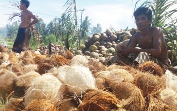 Dua petani kelapa duduk di sela bekerja mengupas kelapa di Parebok, Kotim.