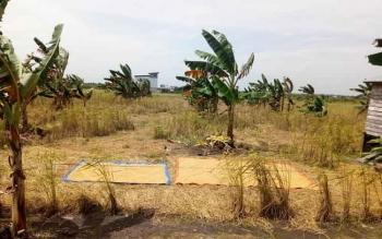 Lahan pertanian di Kampung Sambas, Kelurahan Panda Kecamatan Sukamara.