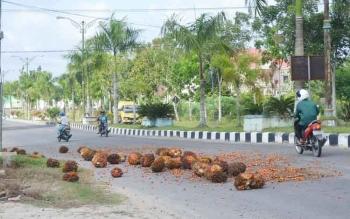 Buah kelapa sawit berserakan di jalan akibat tidak ditutuo jaring saat diangkut.
