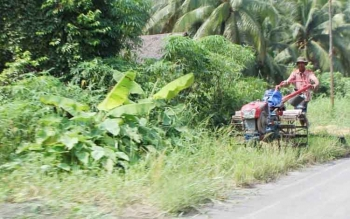 Seorang petani sedang menggunakan handtraktor yang digunakan untuk membajak sawah.