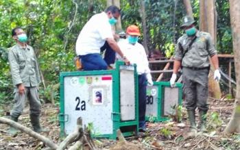 CEO PT Sawit Sumbermas Sarana Tbk Vallauthan Subraminam saat akan melepaskan orangutan di Pulau Salat, Kabupaten Pulang Pisau, Rabu (5/4/2017).