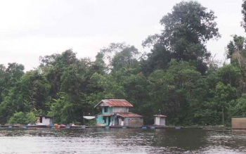 Danau Seluluk menjadi salah satu area restoking oleh Dinas Perikanan Kobar yang bertujuan menjaga keanekaragaman jenis ikan.
