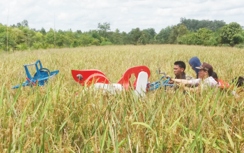 Sejumlah petani sedang mendorong mesin panen padi, saat panen di Desa Basirih Hilir, Kamis (6/4/2017).