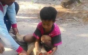 Anak Dusun Terantang Desa Natai Sedawak saat menangkap anjing peliharaannya yang akan diberi vaksin oleh Dinas Ketahanan Pangan dan Pertanian Sukamara.