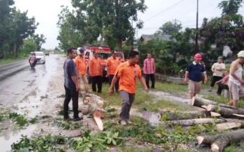 Petugas BPBD Kobar mngevakuasi pohon tumbang di Jalan Ahmad Yani Pangkalan Bun karena terhempas angin ribut, Kamis (6/4/2017)