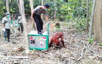 Kapolres Pulang Pisau AKBP Dedy Sumarsono saat melepas seorang hutan di Pulau Salat.