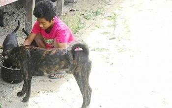 Anak-anak Dusun Terantang Desa Natai Sedawak Kecamatan Sukamara saat bermain dengan ajing peliharaannya.