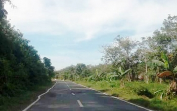 Jalan trans Kalimantan dari Pulang Pisau menuju Palangka Raya.