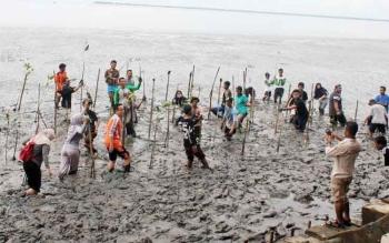 Sejumlah relawan peduli lingkungan bersama DLH Kabupaten Kobar menanam bibit bakau untuk menangkal abrasi.
