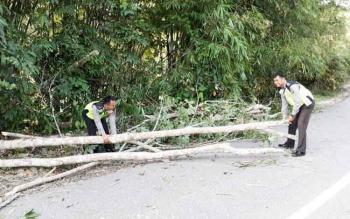 Anggota Satlantas Polres Barito Utara membersihkan pohon yang tumbang ke jalan raya, Rabu (12/4/2017).
