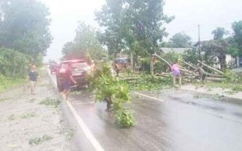 Belum lama ini pohon tumbang di Jalan Ahmad Yani dekat Ponpes Ar-Raudhah Kelurahan Baru Kecamatan Arsel akibat ditiup angin kencang.