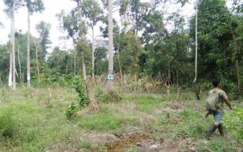 Salah satu hutan di Kotawaringin Timur (Kotim), Hutan Sagonta sangat dekat dengan Kota Sampit