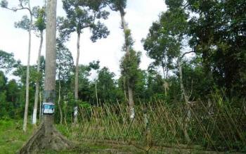 Salah satu hutan di Kotawaringin Timur (Kotim), Hutan Sagonta, sangat dekat dengan Kota Sampit