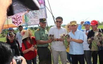 Gubernur Kalteng, Sugianto Sabran saat melakukan panen Perdana komoditas bawang merah di Tangkiling belum lama ini.