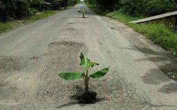 Warga ketika menanam pohon pisang di Jalan Samuda-Ujung Pandaran yang baru selesai dikerjakan pada akhir 2016 lalu.
