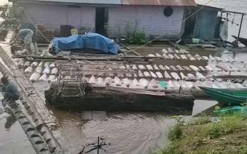 Lokasi penampungan karet di Sungai Barito, Kabupaten Murung Raya.