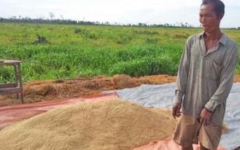 Beras gabah hasil produksi petani hanya bisa memenuhi 41% kebutuhan beras konsumsi di Kabupaten Kobar. Selebihnya didatangkan dari Pulau Jawa dan Kalimantan.