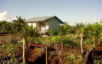 Kondisi pekarangan rumah di UPT Hiyang Bana yang sudah ditanami kelapa sawit