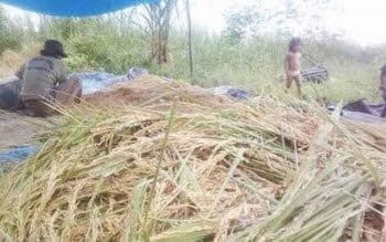Lahan pertanian di Desa Tanjung Terantang