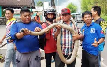 Syahrani saat memamerkan ular king kobra, sabtu (29/4/2017)