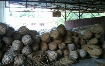 Puluhan gulungan rotan menumpuk di pusat produksi dan kerajinan rotan Hampangen Kabupaten Katingan. Pusat produksi dan kerajinan rotan Hampangen ini sudah sejak lama mati suri.