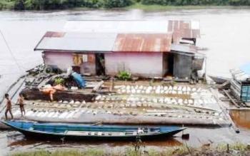 Salah satu tempat penampungan karet yang ada di Sungai Barito, Kabupaten Murung Raya.