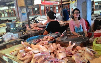 Seorang pedagang daging ayam di Pasar Kahayan sedang menunggu pembeli