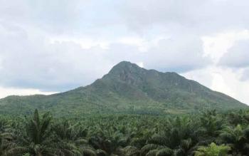 Kebun sawit milik PT BJAP di sekitar kaki Bukit Marundau ini diduga telah melakukan pencaplokan lahan milik warga.