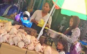 Salah satu pedagang ayam potong di pasar tradisional Indrasari Pangkalan Bun Kabupaten Kotawaringin Barat (Kobar).