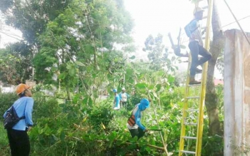 Petugas dari PLN Rayon Kuala Pembuang menebang ranting dan dahan pohon yang mengganggu kabel listrik, Jumat (12/5/2017).