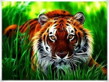 AWAS...Di Hutan Pangkalan Bun Masih ada Harimau