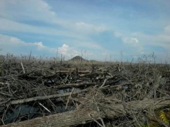 Sejauh mata memandang hamparan luas bekas hutan terbakar sekitar Bukit Bulan. Jika tahun ini kemarau berlangsung lama maka batang kayu yang kering ini siap menyala.