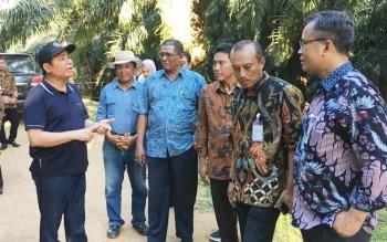 Haji Abdul Rasyid AS, owner CBI Group (topi hitam) berbincang dengan jajaran direksi BNI Pusat di PT SSMS saat meninjau peternakan sapi di dalam kebun kelapa sawit