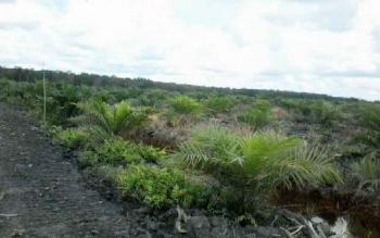 Ratusan hekatare kebun milik pribadi yang mengatasnamakan kelompok tani, di Kecamatan Kota Besi.