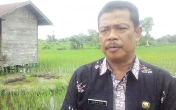 Kepala Bidang Produksi Dinas Pertanian Kabupaten Kapuas Jarwadi