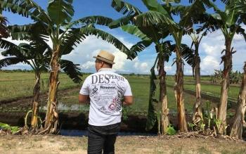 Lahan pertanian di desa Tanjung Terantang Kecamatan Arut Selatan Kabupaten Kobar.