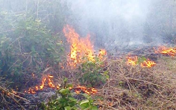 Kebakaran lahan yang terjadi di wilayah Kecamatan Sukamara, beberapa waktu lalu.