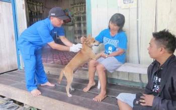 Pemberian vaksin rabies kepada anjing milik warga di Murung Raya.
