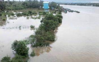 Air Sungai Katingan di sekitar Jembatan Kasongan kembali meluap, akibatnya tanaman padi dan palawija warga terendam banjir, Jumat (2/6/2017).