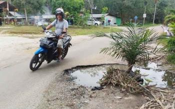 Jalan Damang Gamang yang rusak ditanami sawit oleh warga, Minggu (4/6/2017)