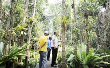 Salah satu titik hutan di kawasan wisata Arboretum, Palangka Raya.