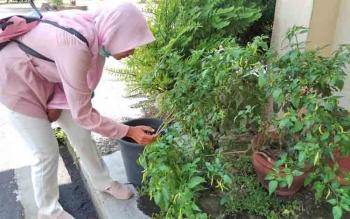 Warga melihat tanaman cabai di pekarangan rumahnya.