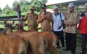 Penyerahan bibit sapi oleh Bupati Mura, Perdie M Yoseph kepala perwakilan kelompok tani Sungai Baan di Pos Kesehatan Hewan, Kota Puruk Cahu, Senin (5/6/2017).